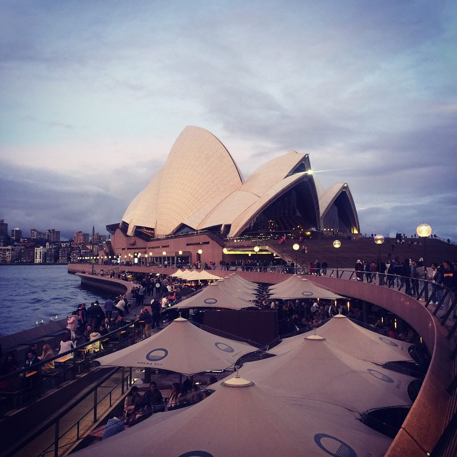 AVIAN TIMETRAVELER: A DAY IN SYDNEY WITH THE WORLD'S MOST UNINTERESTING TOURISTS