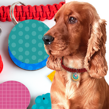 Load image into Gallery viewer, Chalk & Chuckles Dog Tug Toy and Collar Activity Game