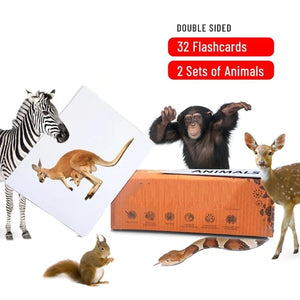 Buy Bloomy Brain Different Animals Flash Cards - GiftWaley.com