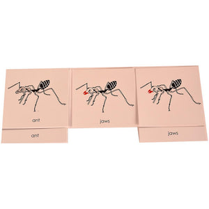 Buy Kidken Montessori Nomenclature Learning Cards - Ant - GiftWaley.com