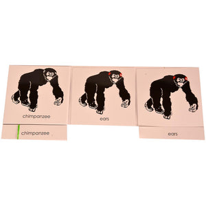 Buy Kidken Montessori Nomenclature Learning Cards - Chimpanzee - GiftWaley.com