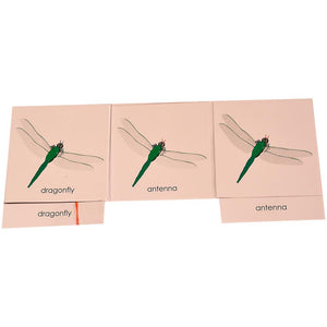 Buy Kidken Montessori Nomenclature Learning Cards - Dragonfly - GiftWaley.com
