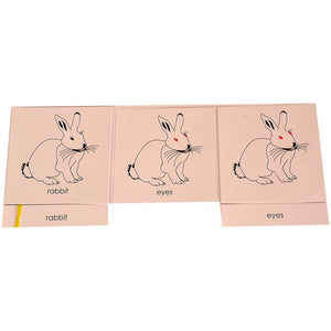 Buy Kidken Montessori Nomenclature Learning Cards - Rabbit - GiftWaley.com