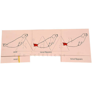Buy Kidken Montessori Nomenclature Learning Cards - Seal - GiftWaley.com