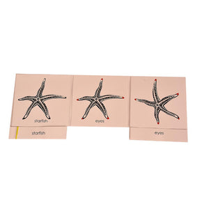 Buy Kidken Montessori Nomenclature Learning Cards - Starfish - GiftWaley.com