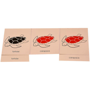 Buy Kidken Montessori Nomenclature Learning Cards - Tortoise - GiftWaley.com