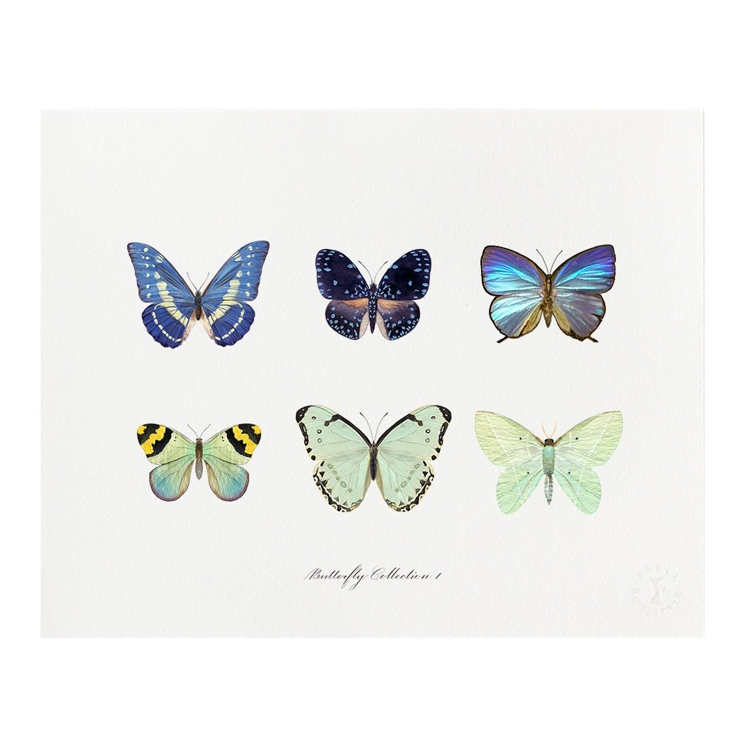 Butterfly Collection Print, Felix Doolittle