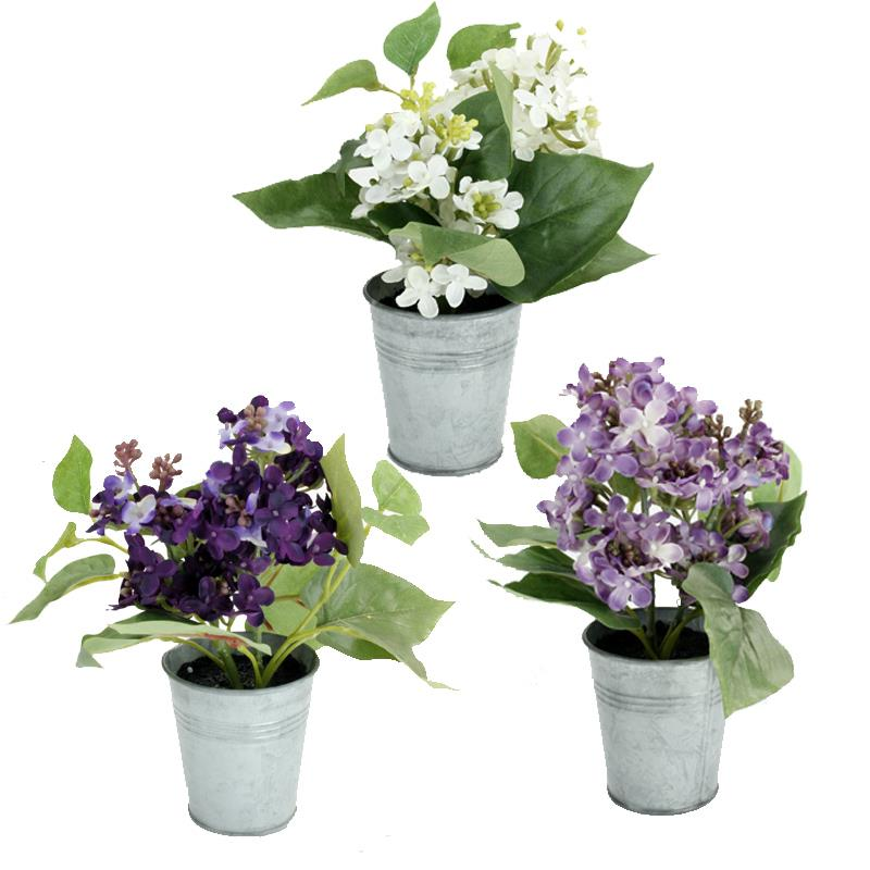 Lilac Bloom in Metal Pot
