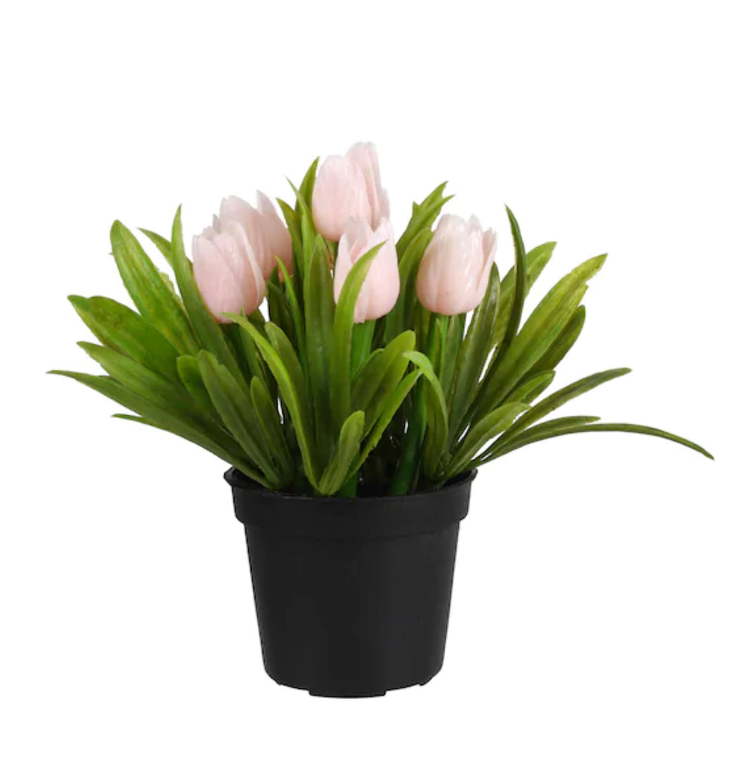 Pink Potted Tulip 5.5