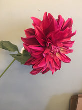 Load image into Gallery viewer, Dahlia Assorted Colours