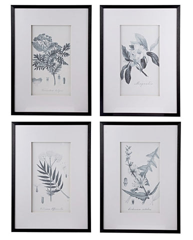 Black and White Vintage Inspired Botanical Prints - CENTURIA
