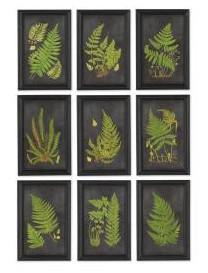 Framed Fern Botanical Prints-Set of 9 - CENTURIA