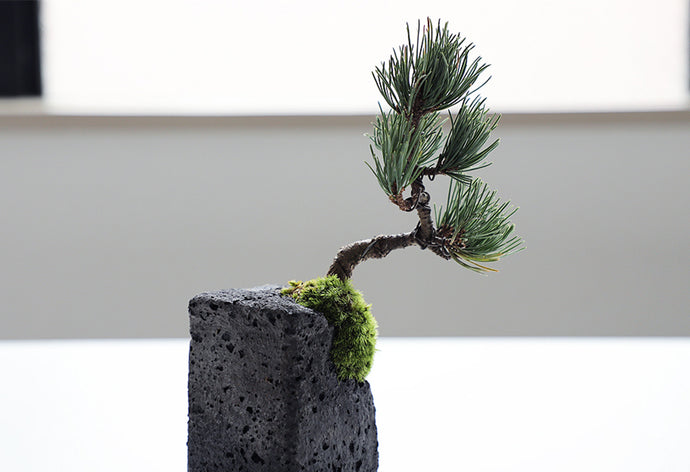 Bonsai Wind Protection