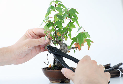 bonsai wiring