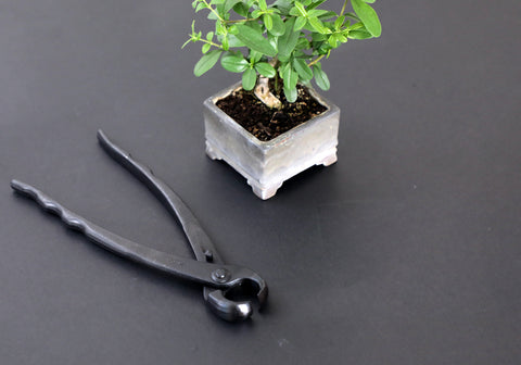 bonsai knob cutter