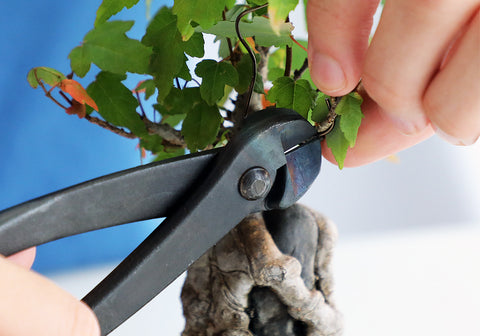 bonsai tree wire cutting