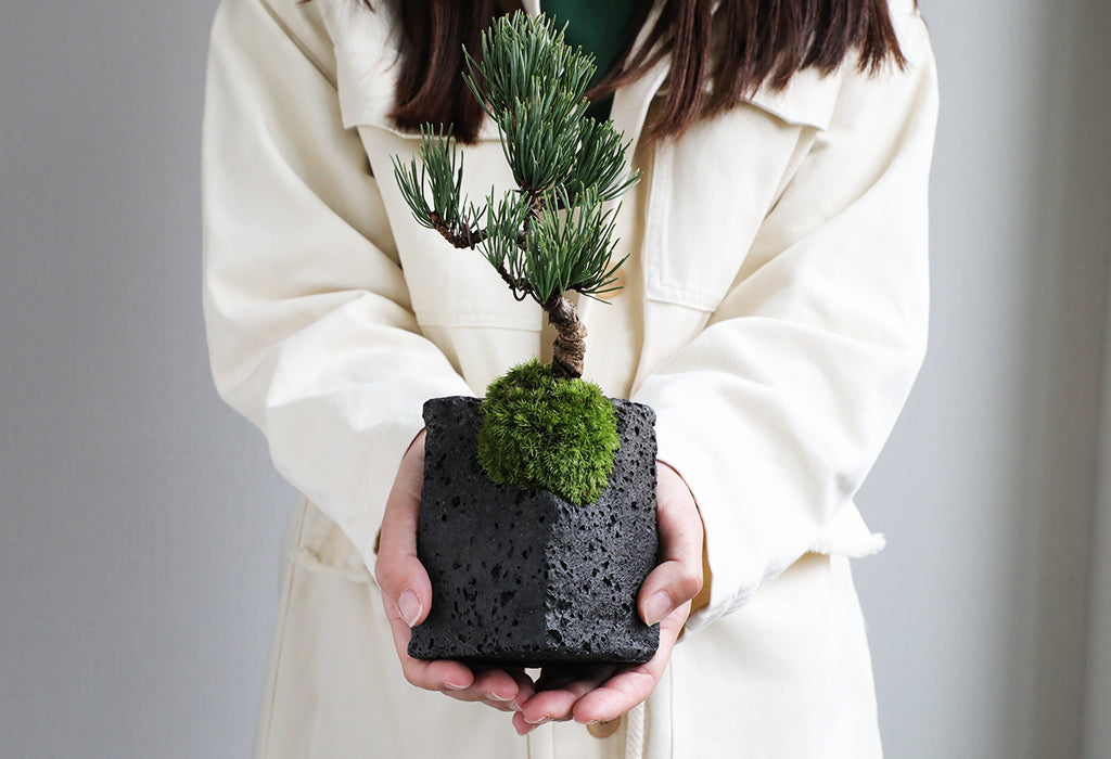 bonsai _winter caring