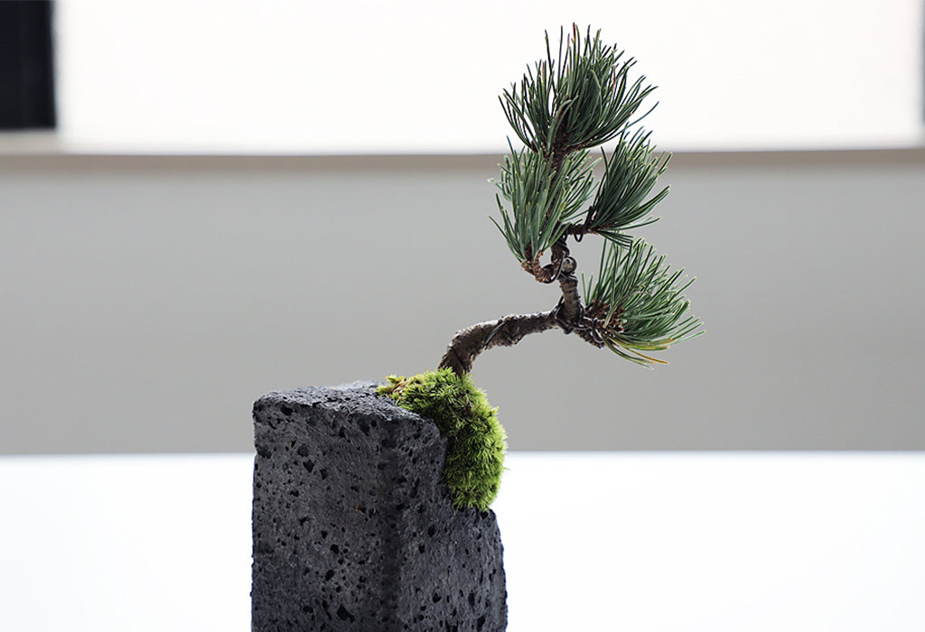 bonsai_wind_protection