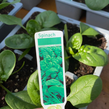 Load image into Gallery viewer, Spinach