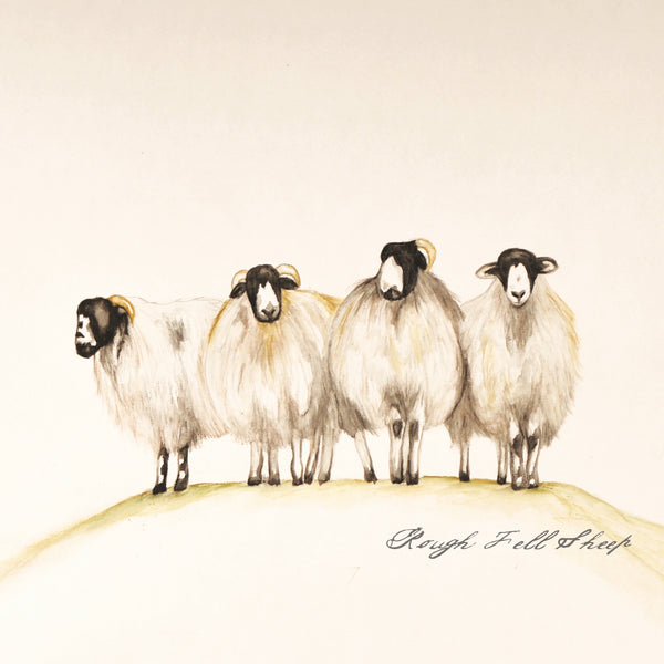 Rough Fell Sheep Greetings Card
