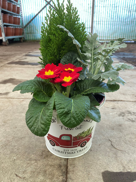 17cm Farmers Market Patio Bucket with Christmas seasonal planting