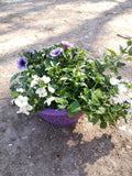 Colour Themed Decorative Summer Patio 25cm Plastic Bowl (CLICK PHOTO TO SEE MORE COLOURS)