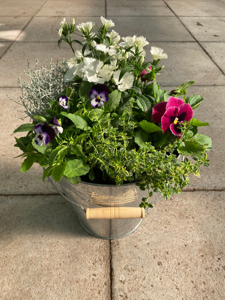28cm Large Zinc Patio Pot with Seasonal Planting