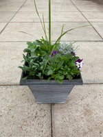 Tall Square Design Seasonal planted Patio Pot (CLICK TO SEE OTHER COLOURS)