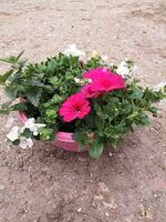 Colour Themed Decorative Summer Patio 30cm Plastic Bowl (CLICK PHOTO TO SEE MORE COLOURS)