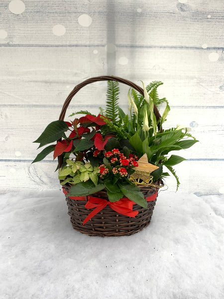 30cm Red Ribbon Classic Christmas Planted Arrangement