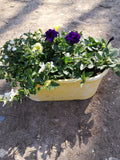 Colour Themed Decorative Plastic Summer Patio Trough (CLICK PHOTO TO SEE MORE COLOURS)
