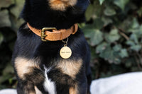 Luxury leather dog collar - Giddy Dogs