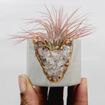 Load image into Gallery viewer, Smoky Quartz Geode Vessel Light