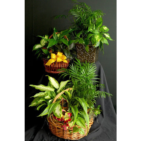 Mixed Green Planter Baskets