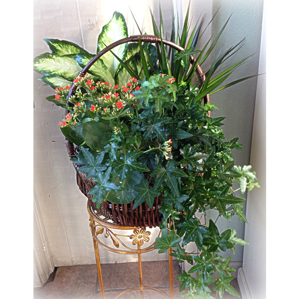 Blooming Planter Baskets