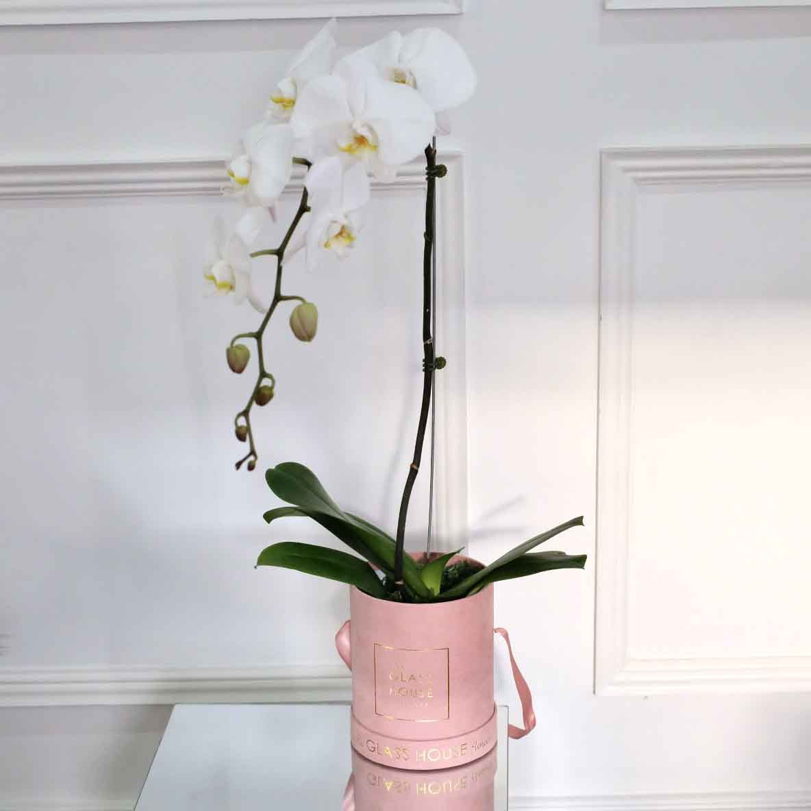 Single Phalaenopsis Box