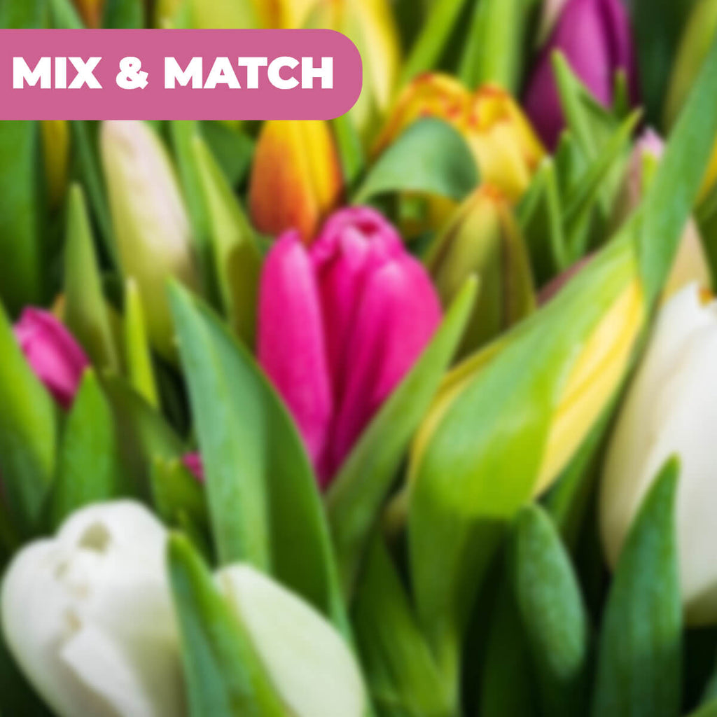 20 Premium Tulpen - Mix & Match