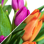 60 Premium Tulpen - Mix & Match