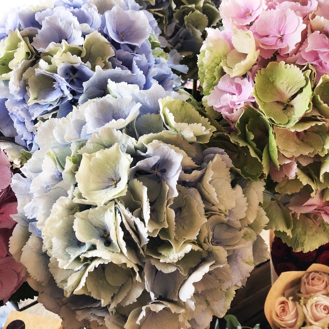 Hydrangeas in a Variety of colours