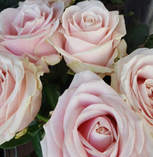 Load image into Gallery viewer, Roses in a variety of colours