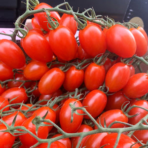 Cherry Plum Tomatoes