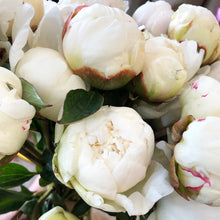Load image into Gallery viewer, Peonies White