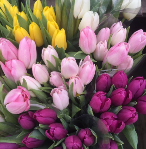 Tulips in a variety of colours