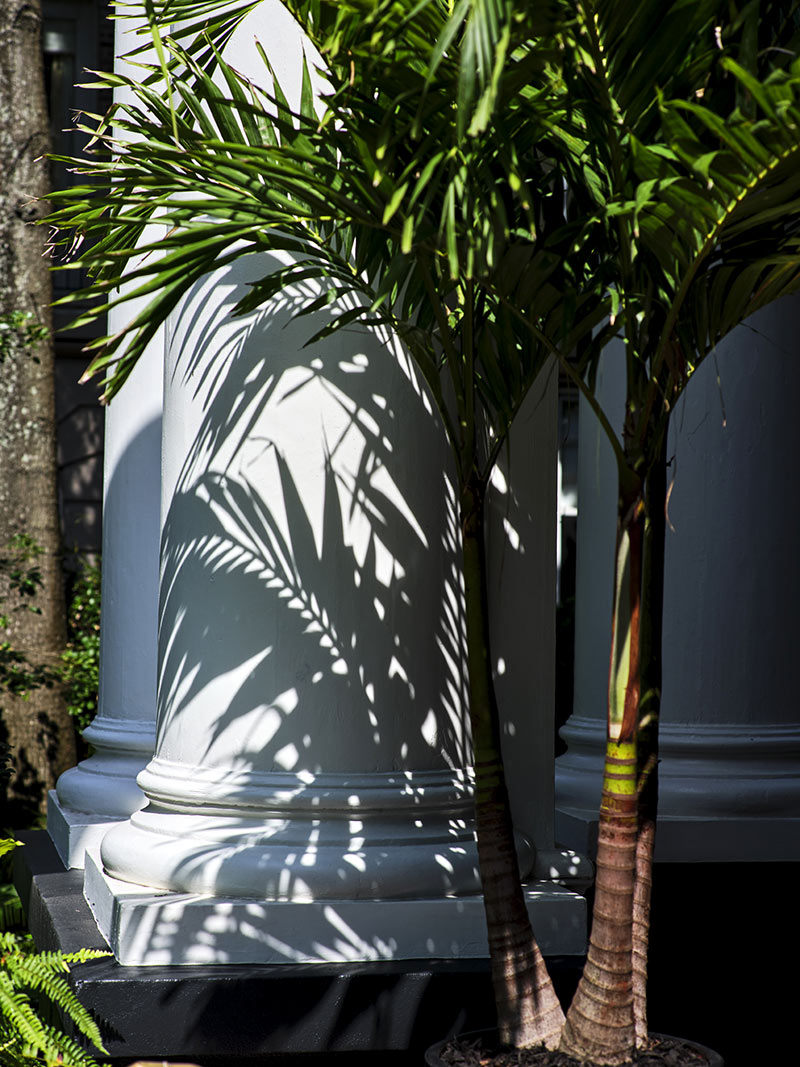 The Columns Hotel, New Orleans - close up of classic white columns and potted palm trees
