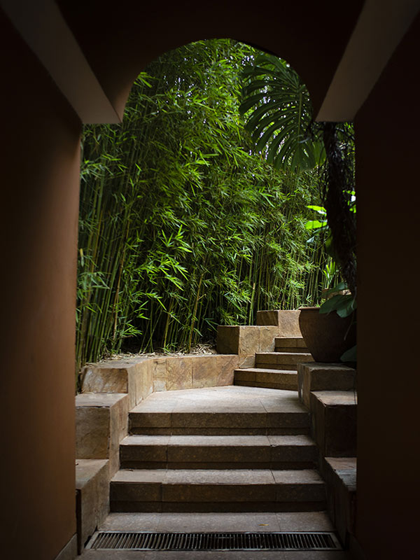 Tribe, Nairobi - shaded staircase with bamboo grove