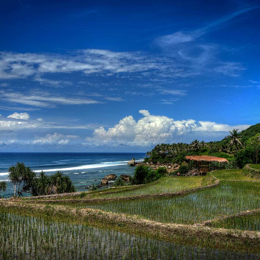 Nihi Sumba, Sumba Island- tiered rice paddies overlooking blue Indian Ocean