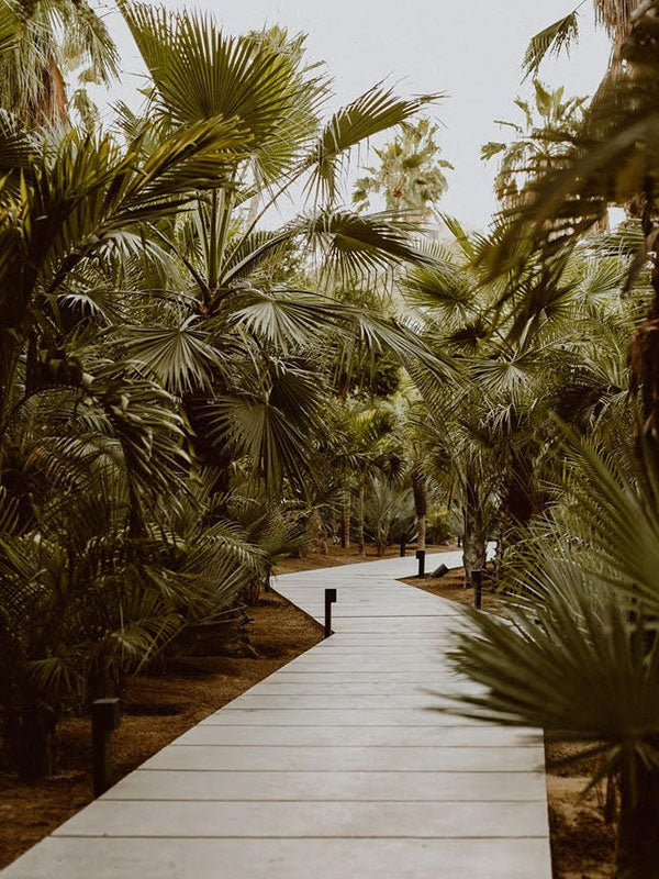 Acre, Los Cabos - outdoor palm tree path