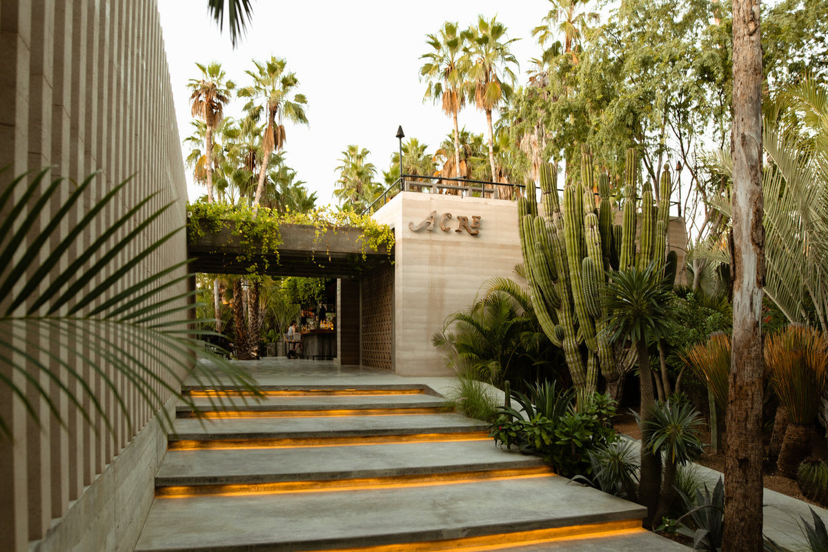Acre, Los Cabos - sleek entry way with jungle plants and cacti and wooden walls