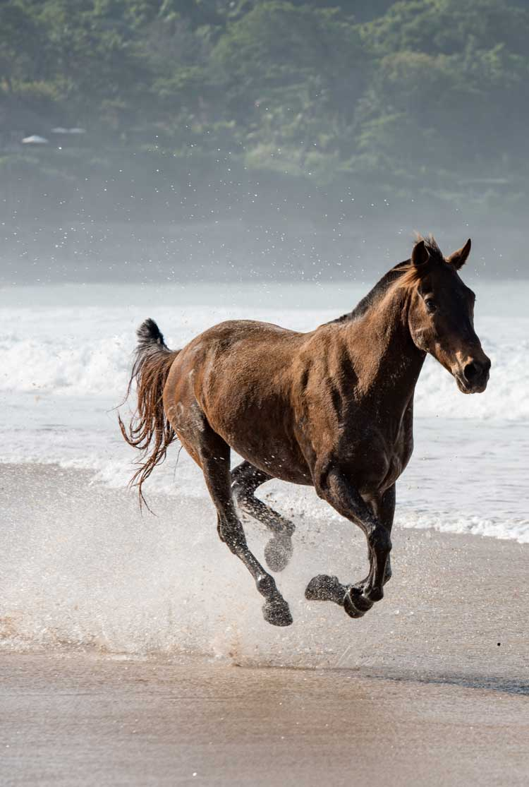 Nihi Sumba, Sumba Island- brown horse running down the beach splashing sand and water