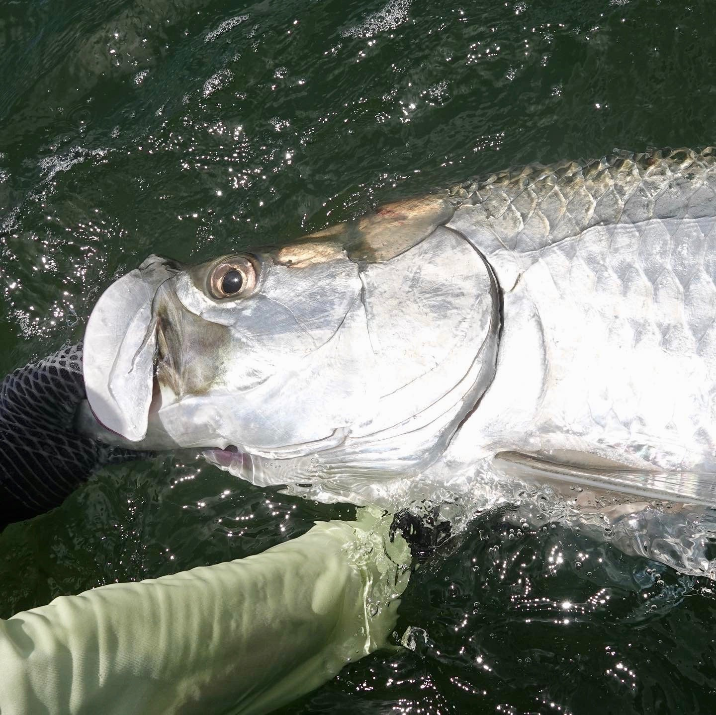 Epic Weekend of fishing for tarpon!